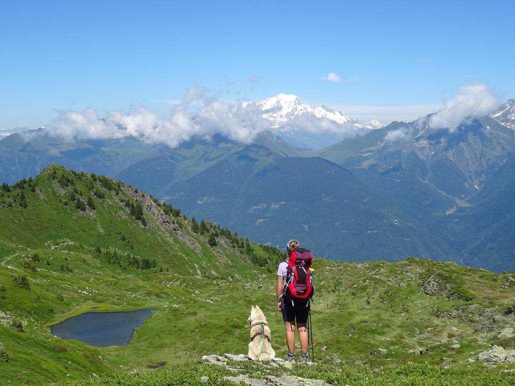 Black Diamond Trail Back Trekking Poles