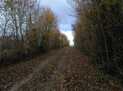 Sentier forestier Breuil Magné