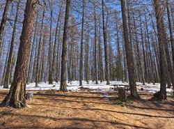 Une forêt dans le Queyras